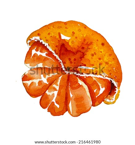 Watercolor Painting of Orange Isolated on White Background