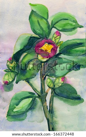 Watercolor Painting of pink Camellia branch - stock photo