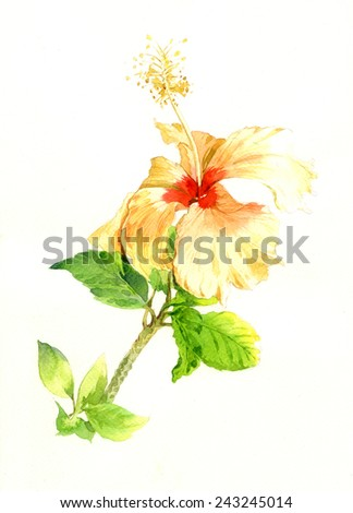 watercolor painting of Yellow flower on white background - stock photo