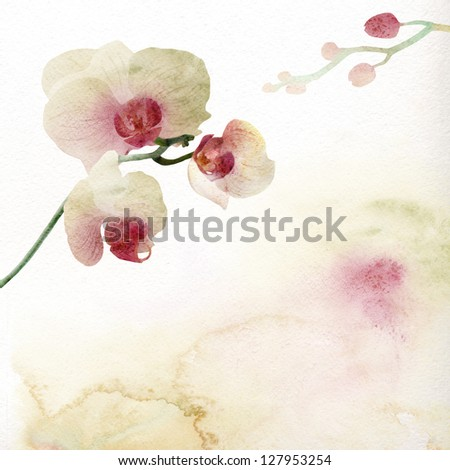 Watercolor painting, orchid - stock photo