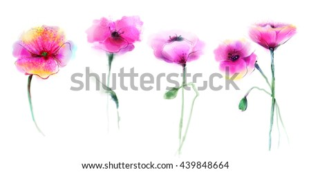 Watercolor painting poppy flower. Isolated flowers on white background. Set of Pink and red poppy flower painting. Hand painted watercolor floral, flower background. - stock photo