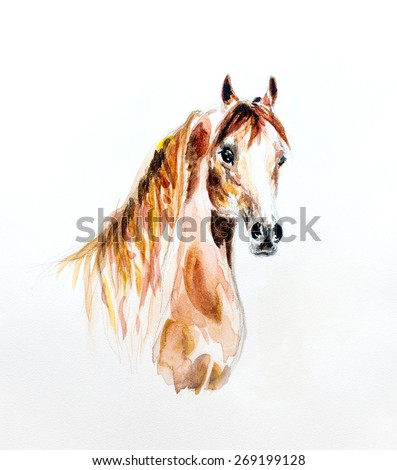 watercolor painting - portrait of arabian horse - stock photo