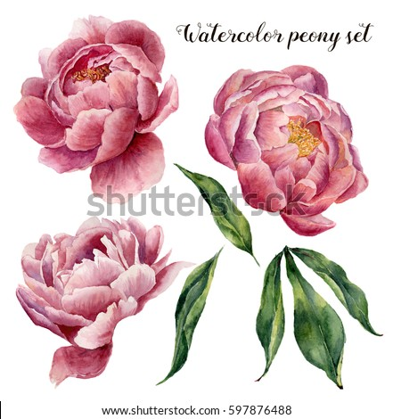 Watercolor Peony Stock Images, Royalty-Free Images & Vectors | Shutterstock