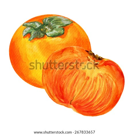 Watercolor Persimmon whole and half hand drawn illustration isolated on white, food ingredient, organic natural vegetarian fruit for design restaurant menu, healthy green market, pattern template