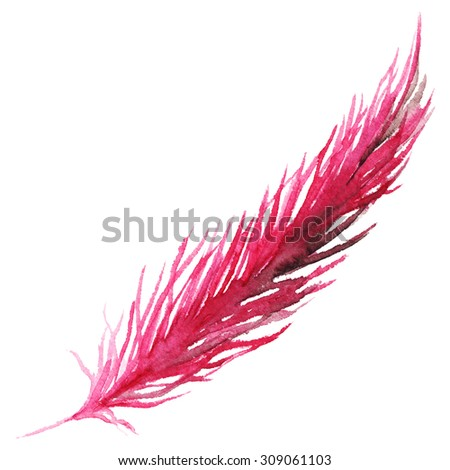 Watercolor pink purple crimson bird feather isolated
