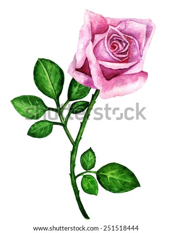 Watercolor pink rose flower with green leaves closeup isolated on a white background - stock photo