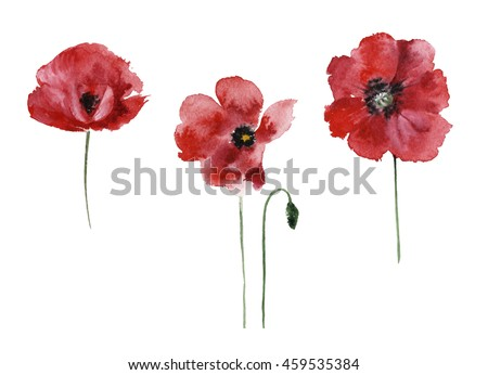 Watercolor poppy set isolated on a white background
