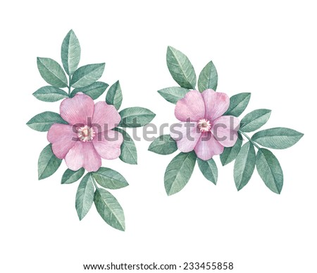 Watercolor rose illustrations - stock photo