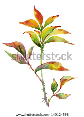 Watercolor rose leaves - stock photo