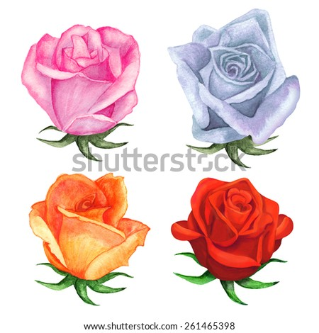 Watercolor roses flowers set closeup isolated on a white background. Hand painting on paper - stock photo