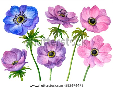 Anemone Stock Images Royalty Free Images Amp Vectors