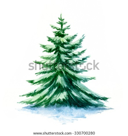 Watercolor spruce. - stock photo