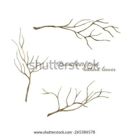 Watercolor tree branches without leaves. Hand drawn illustrations. - stock photo