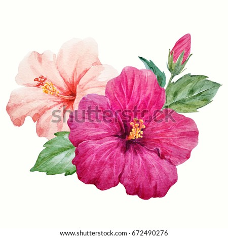 Watercolor Tropical Flower Purple And Delicate Pink Hibiscus With Leaves Bud Hawaiian Composition