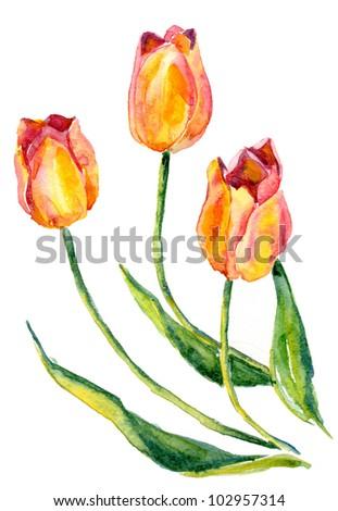Watercolor tulips - stock photo