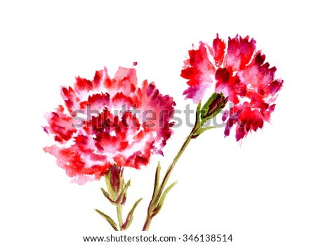 Watercolor two red flower carnation on white background - stock photo