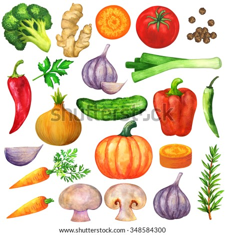 Watercolor vegetables, seasonings, spice isolated on white background set. Hand painting on paper - stock photo