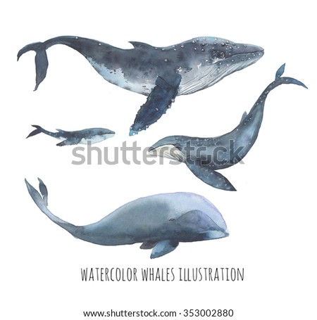 Watercolor whale set. Hand drawn humpback whales, blue whale and bowhead whale isolated on white background. Realistic ocean mammal animals illustrations - stock photo