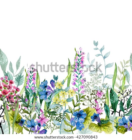 Watercolor wild herbs and flowers over white