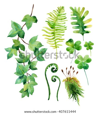 Watercolor wild leaves set isolated on white background.  Woods leaves, moss, ivy branch and clover. Watercolor natural wildlife set. Hand painted forest elements illustration  - stock photo
