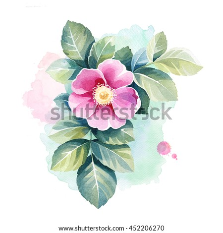 Watercolor wild rose flower