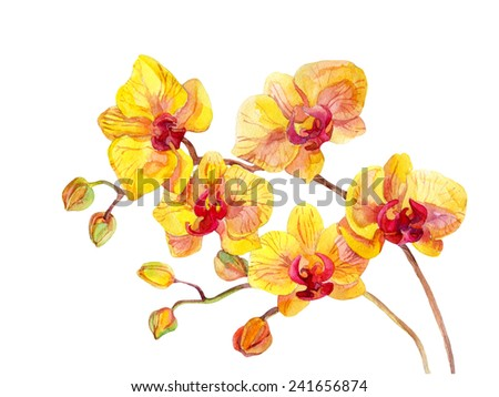 Watercolor yellow orchid flowers on white background - stock photo