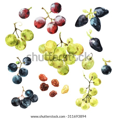 Watercolour illustrations of delicious grape berries  - stock photo