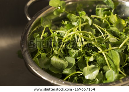 Watercress in colander after rinsing. - stock photo