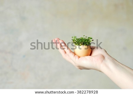 watercress in the egg shell, cress growing in shell of the eggs used for Easter decoration, egg held in the hand (in the fingers)