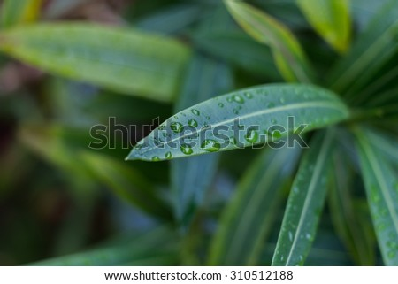 Waterdrops on large leaf - stock photo
