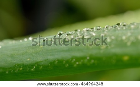 waterdrops on the green