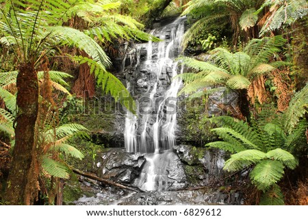 Waterfall in a lush temperate rainforest, surrounded by lush treeferns.  Victoria, Australia. - stock photo