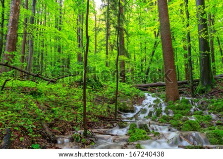 Waterfall in a Spring Forest
