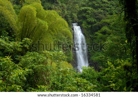 Waterfall in rainforest jungle