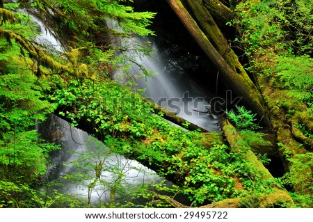 Waterfall in the rainforest of the Olympic Peninsula in the Northwest United States