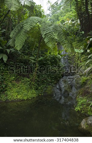waterfall, jungle, forest, tropical, water, nature, landscape, beautiful, green, natural, fresh, park, fall, plant, paradise, leaf, wood, tree, foliage, rock, freshness, flowing, motion, amazing