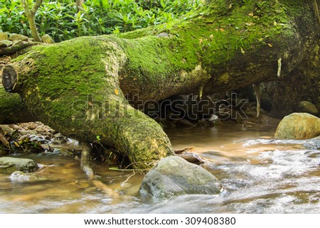waterfall with large roots and moss  - stock photo