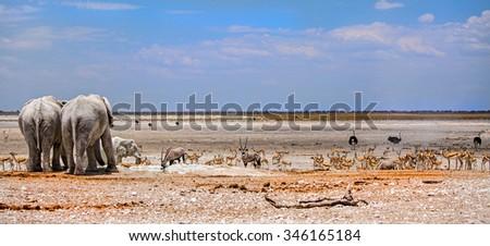Waterhole panorama with elephants, springbok, ostriches & gemsbok oryx - stock photo