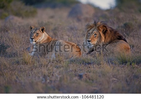 Waterhole Stakeout - stock photo