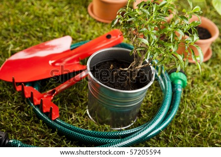 Watering Can And Gardening Tools Sitting In Grass