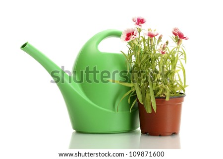 watering can and plant in flowerpot isolated on white - stock photo