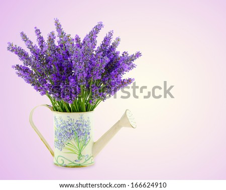 Watering can with plucket lavender over pink background - stock photo