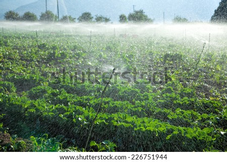 Watering crops by sprinkler irrigation on a farm land - stock photo