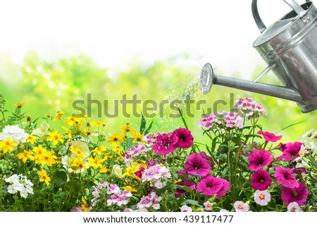 Watering flowers with a watering can in the garden