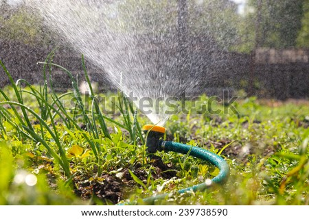 Watering garden equipment  sprinkler hose for irrigation plants.  Sprayer water on the vegetable. - stock photo