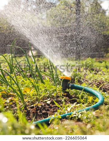 Watering garden equipment  sprinkler. Sprayer water on the vegetable. - stock photo