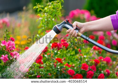 Watering garden flowers with hose - stock photo