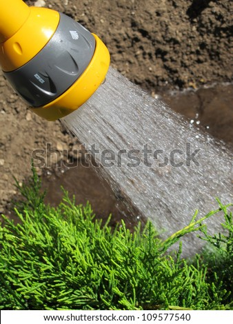 Watering garden plants with a shower sprayer head - stock photo