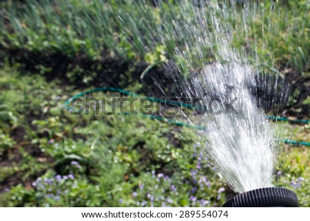 Watering lawn grass with a shower sprayer head - stock photo