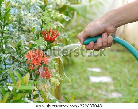 watering plants in garden - stock photo